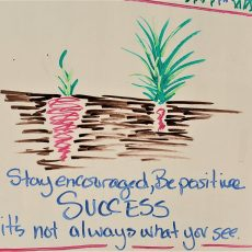 SUCCESS – it's not always what you see. A garden analogy for facilitating teams and organizations